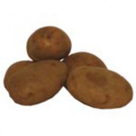 Pomme de terre Bintje
