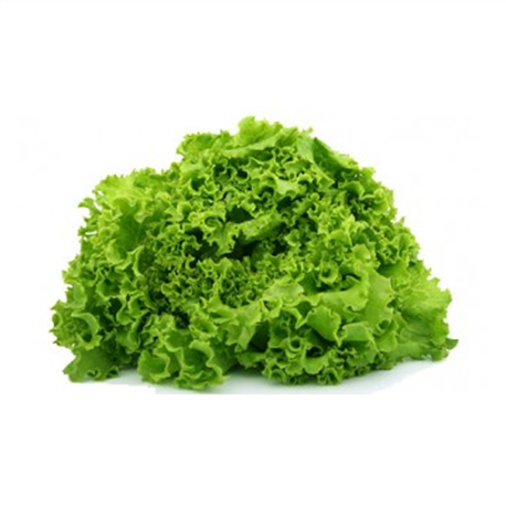Salade Battavia
