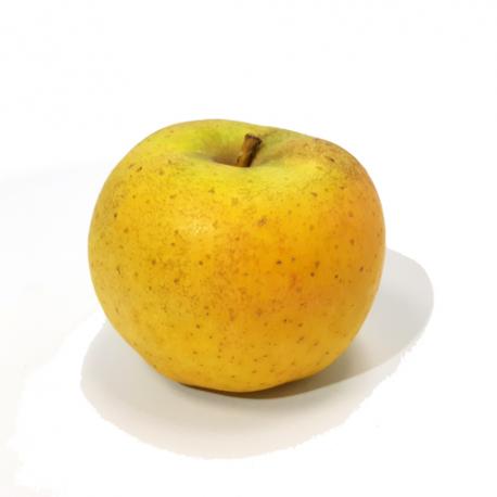 Pomme Chanteclerc grosse