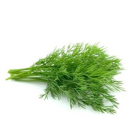 Barquette d'herbes - aneth